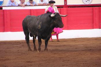 bika figyeli a bikát